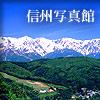 信州写真館 ギャラリー&フリー写真素材集/樹木